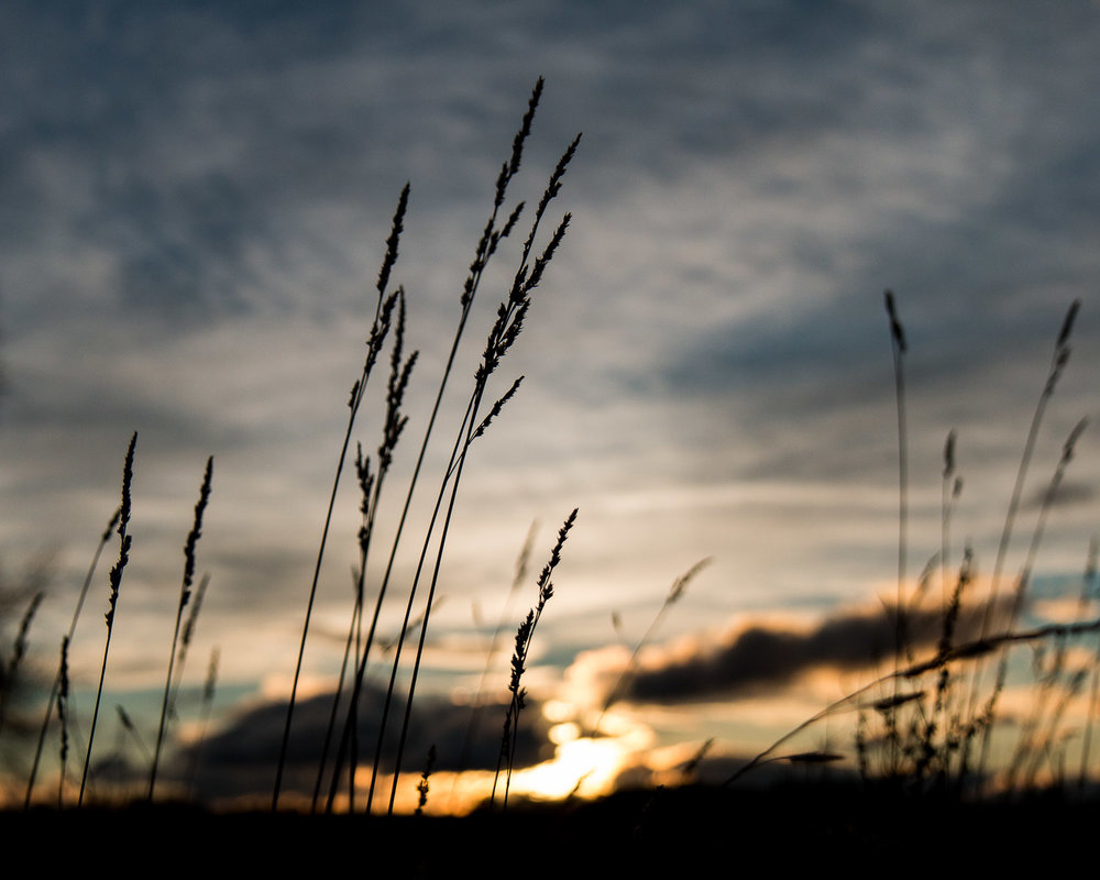 sunset grasses at Culloden