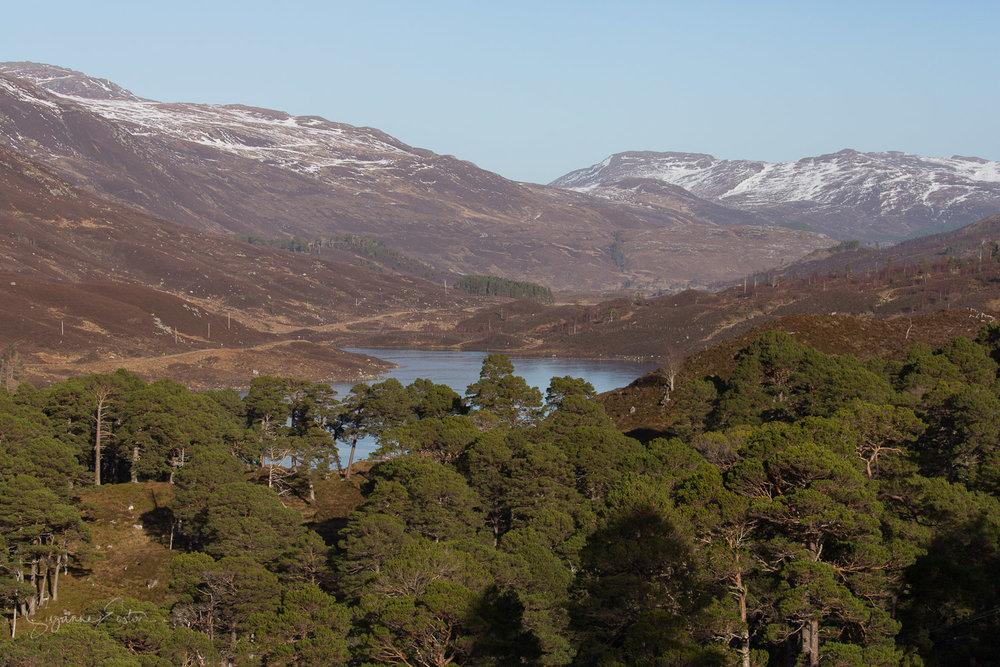 Glen Cannich in the Scottish highlands