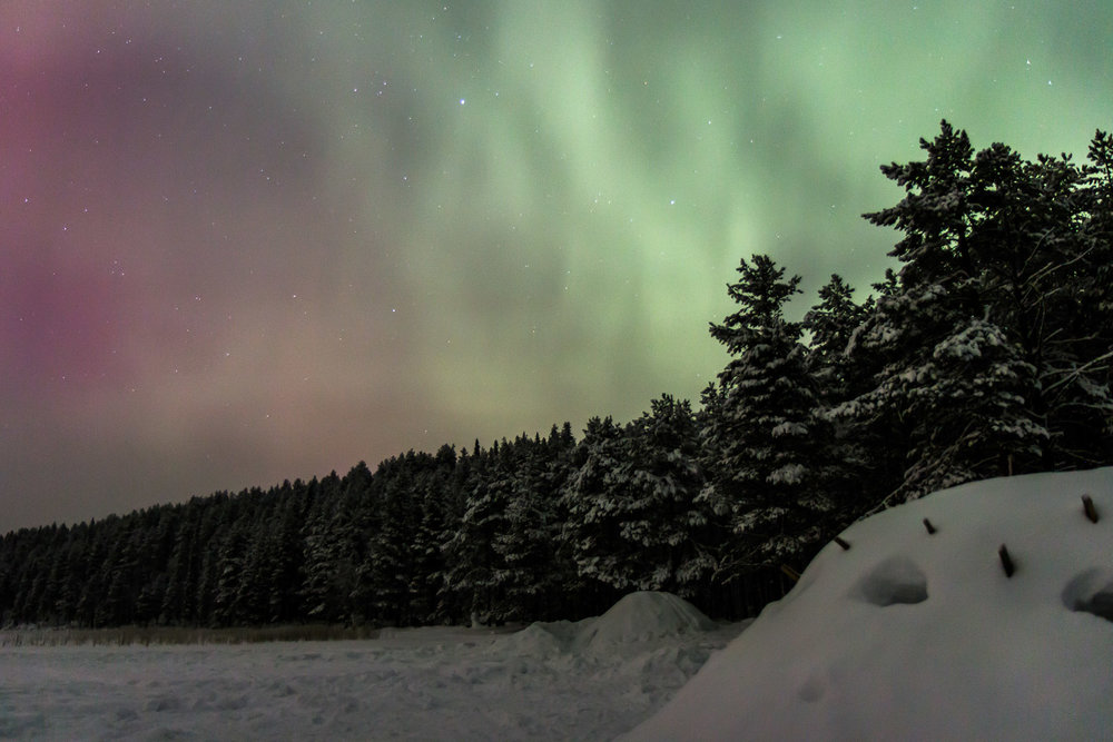 Aurora over winter forest