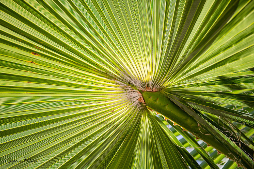 A palm leaf looking uptowards the sky at Palais Bahia in Marrakech