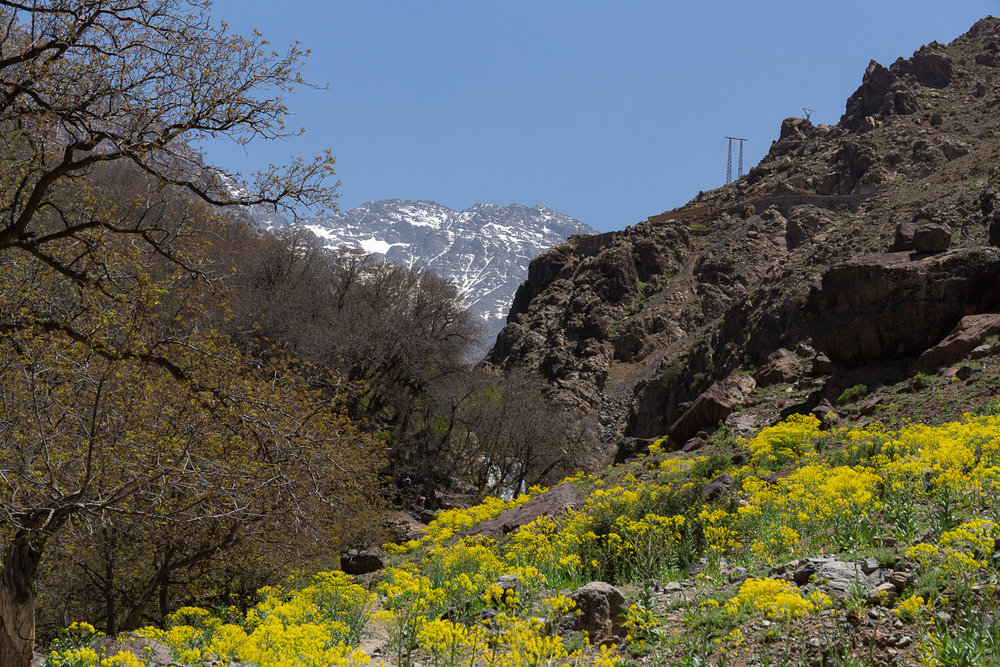 Mount Toubkal from the walnut groves near Imlil