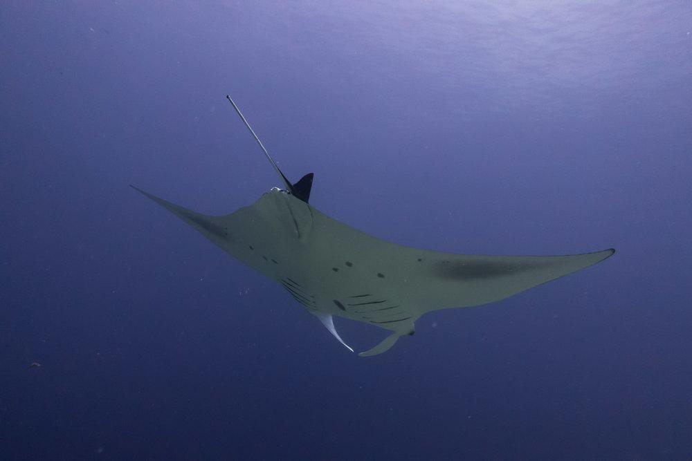 underwater maldives-11.jpg