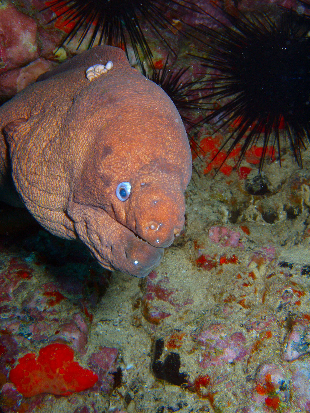 underwater lanzarote-6.jpg