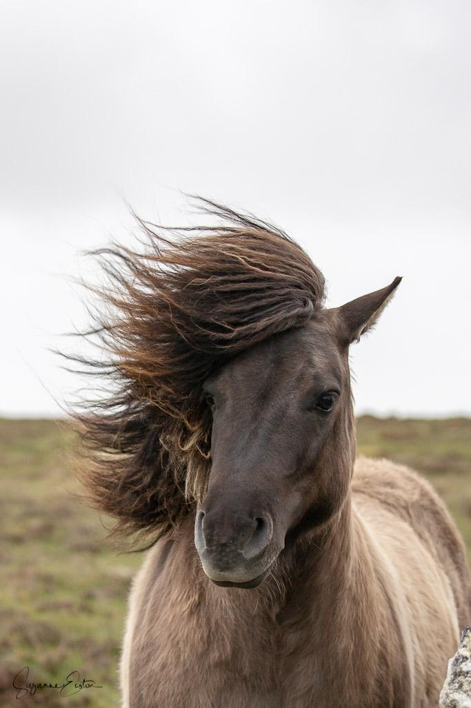 pony hair-4.jpg