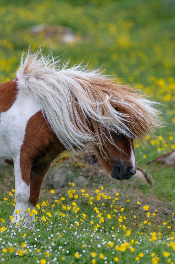 pony hair-8.jpg