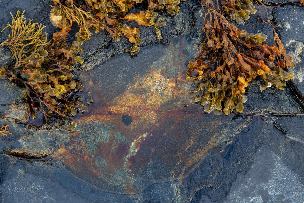 Seaweed-2.jpg