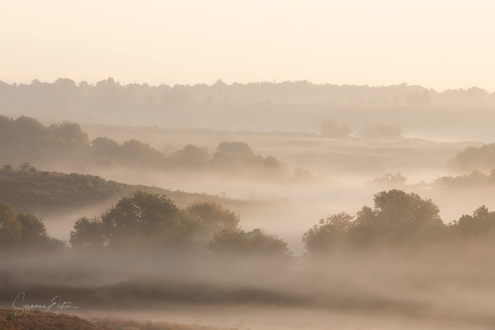 new forest sunrise-2.jpg