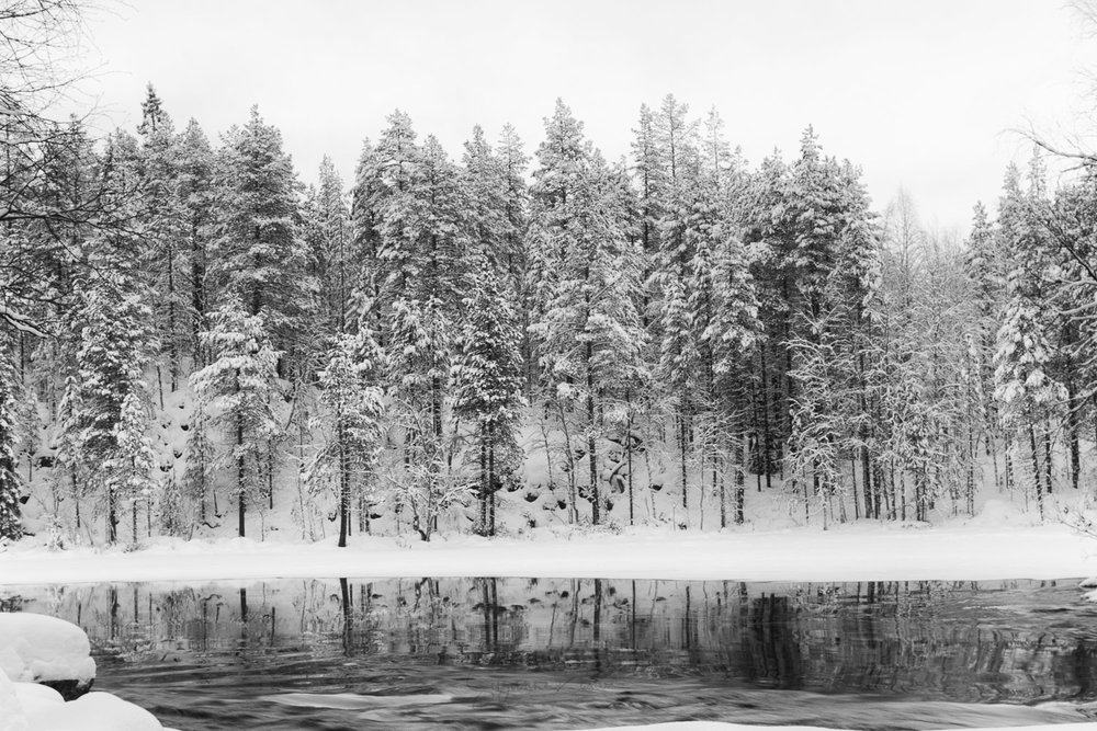 Black and white reflections of spruce trees in a Finnish river in the winter