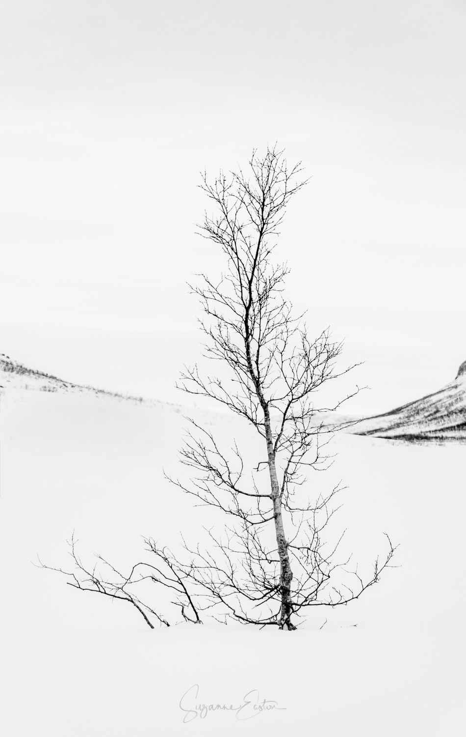 A lone tree in the snow in Norway in black and white