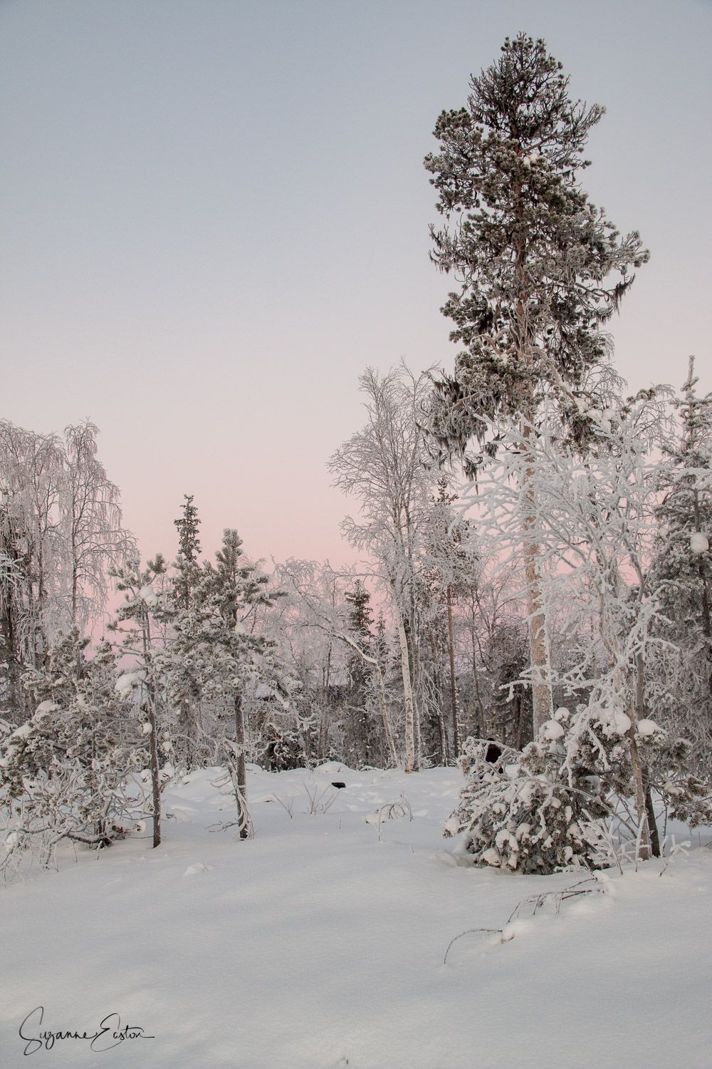 winter landscape with snow and pink sky