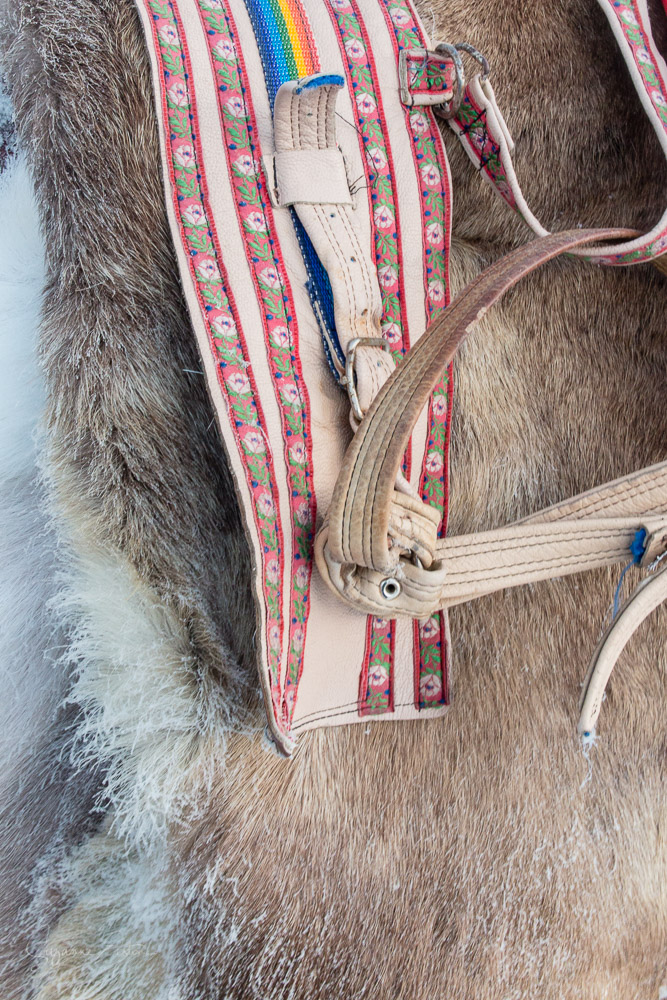 Reindeer skin and Sami decorated reins
