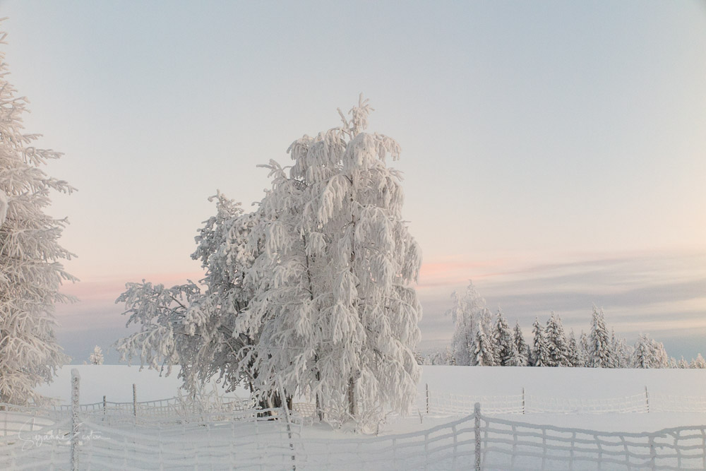 Winter landscape with tree in finland