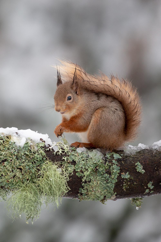 Squirrel on a branch