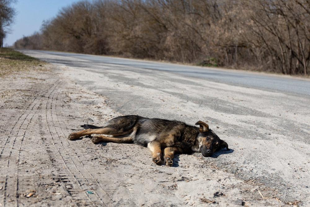 Dog on the roadside