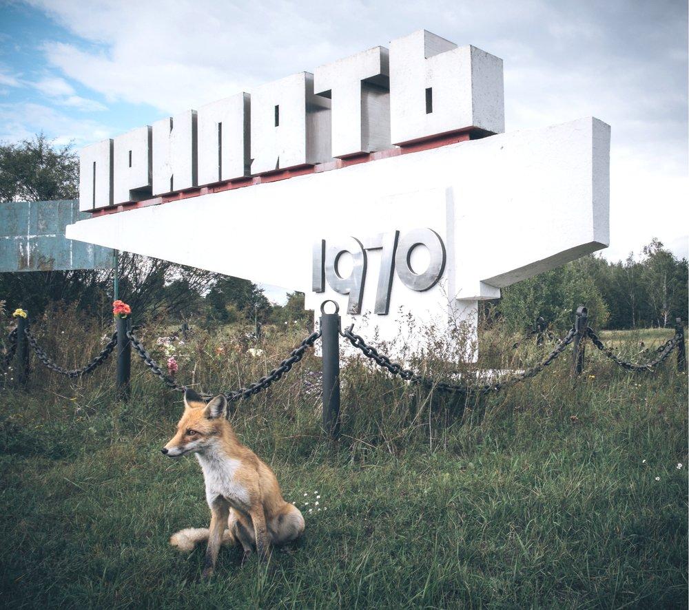 Fox at the Pripyat sign