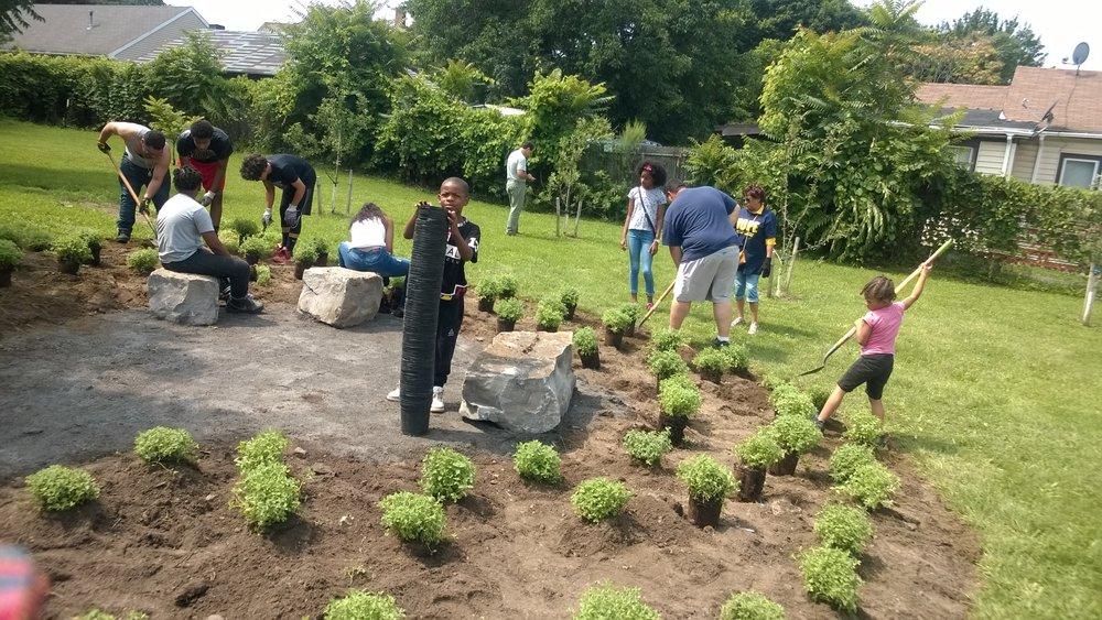 Garden of HOPE cat mint planting 6.jpg