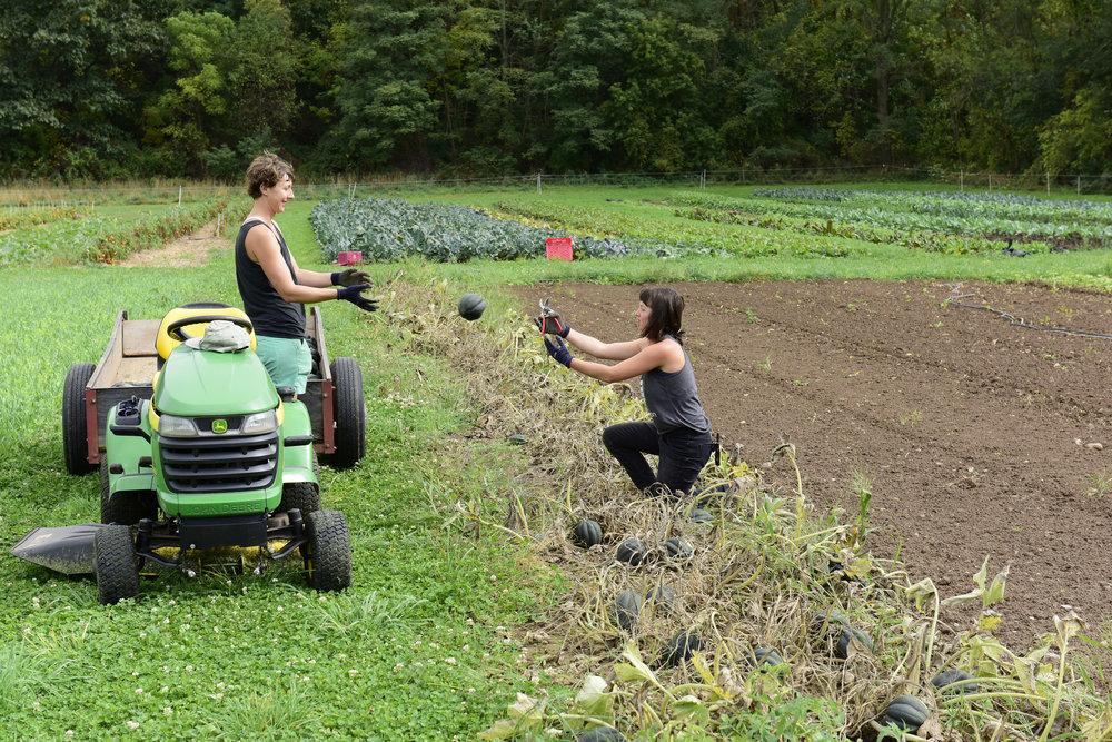 Wild Hill _DSC5060  Jessica (I think) L and Emily R farm workers copy.jpg