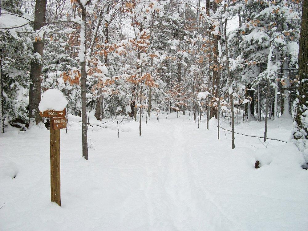 Snowshoe in Big Woods (2) (1024x768).jpg