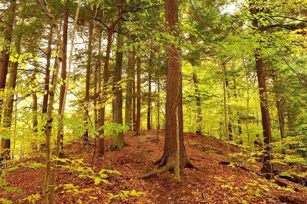 Big Woods 103111 1-Pellet Rd end of Ridge trail DSC_6066 (Copy).JPG