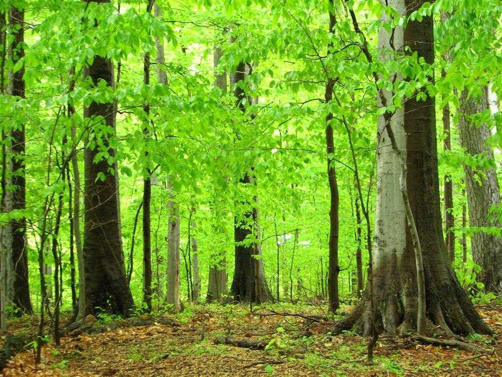 NK Green woodsglt webster 4.jpg