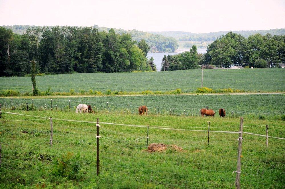 lake view plus horses.jpg