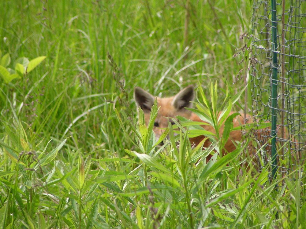 fox 6-3-09 2.JPG