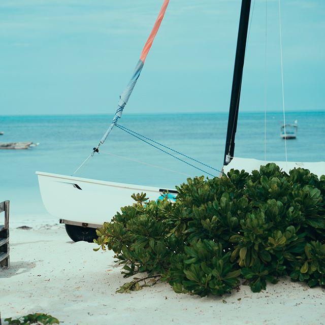 Älskar du också vind och alla aktiviteter som hör till? Zanzibar är helt klart en favorit bland surfare, vindsurfare, kitesurfare … ja ni förstår, ett vindparadis 🌬❤ . . . #watersports #windsurfing #kitesurfing #zanzibar #kilimanjaro #safari #exotictravel #stonetown #pool #sunshine #palmtreelove