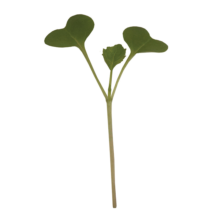 6Broccoli Organic.jpg