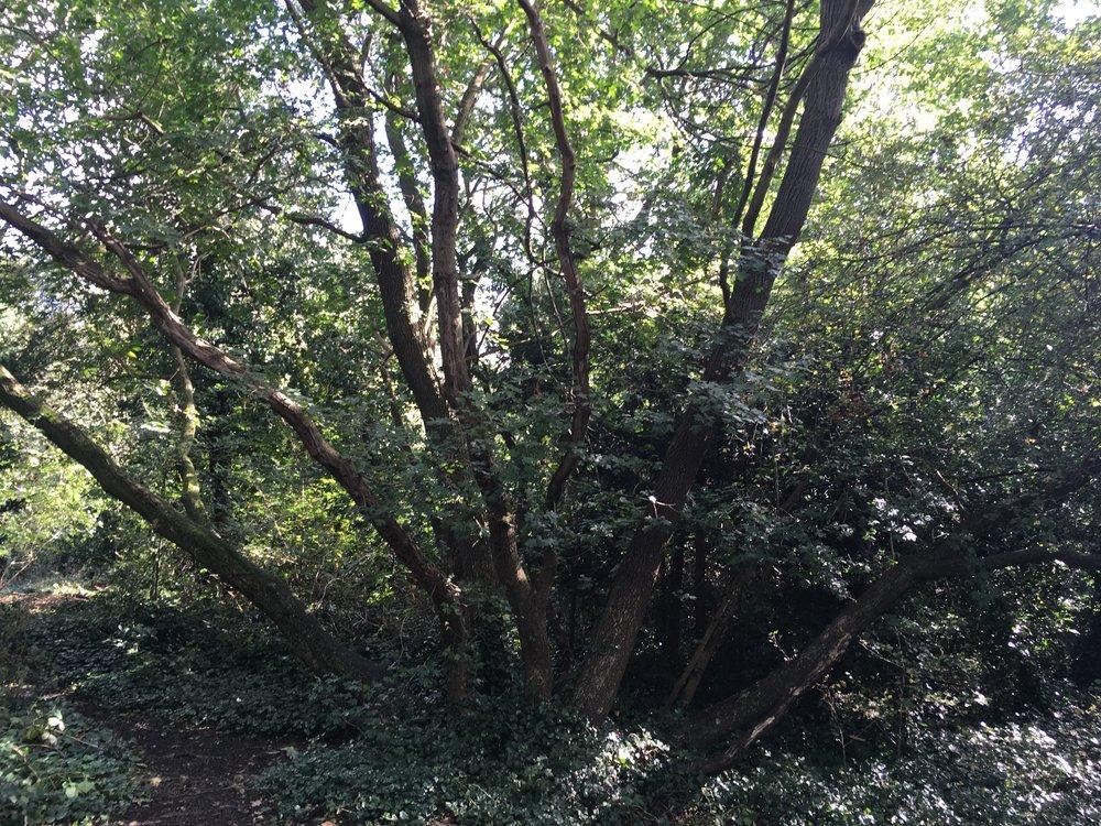 Woods4.jpg