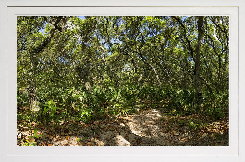 illuminated oaks: cumberland island national park, ga