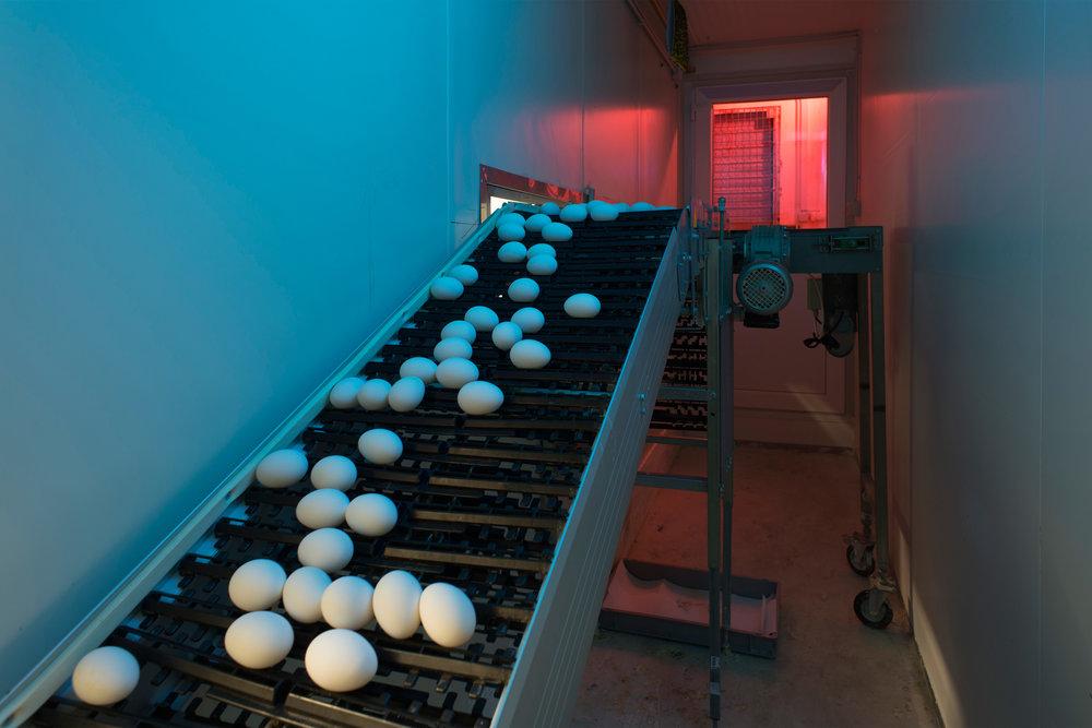 009_production_facilities_novogen_szalai_daniel.jpg