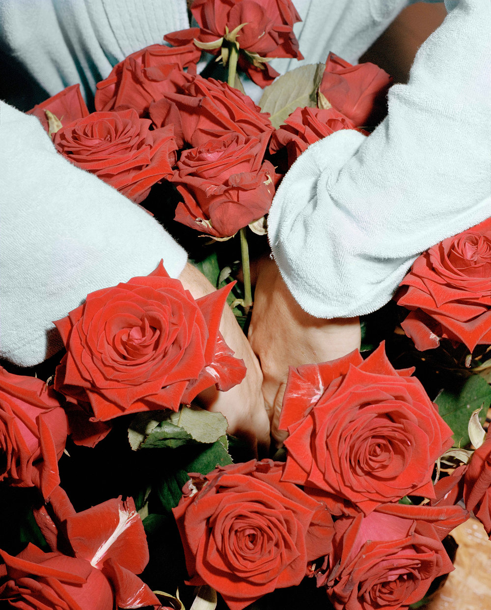 Hands_and_Roses_2017.jpg