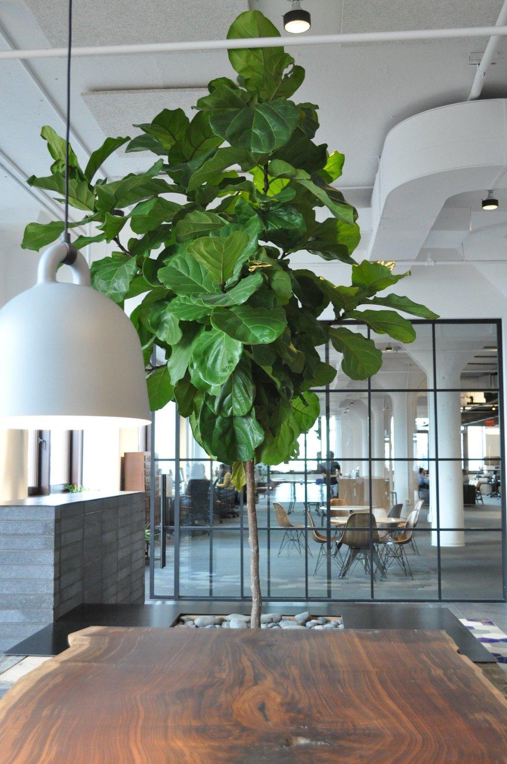 Nyc Indoor Tree Interior Landscape