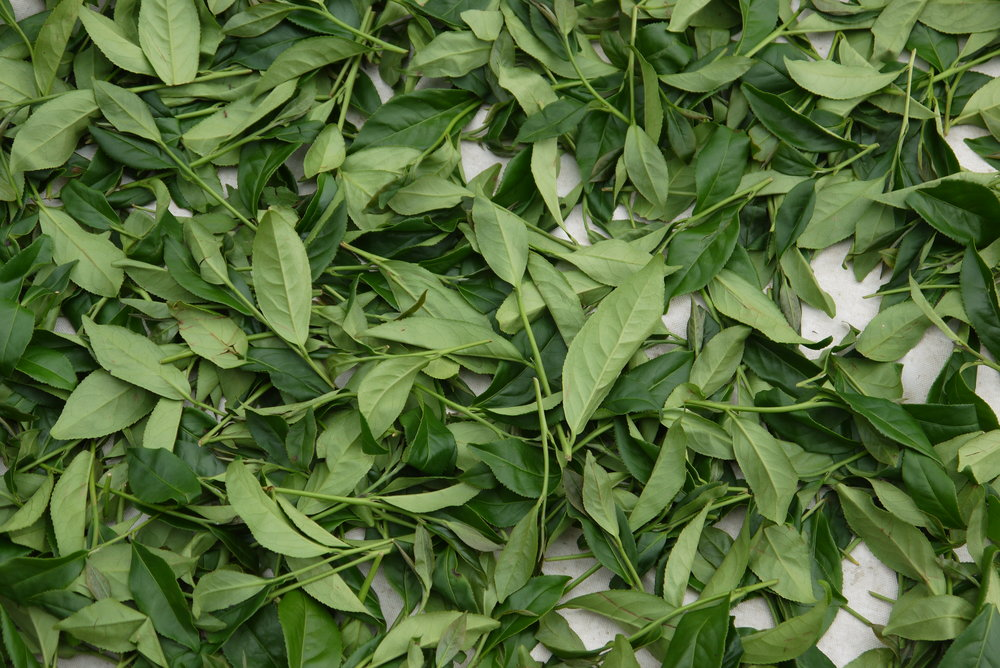 日紅製茶227.JPG
