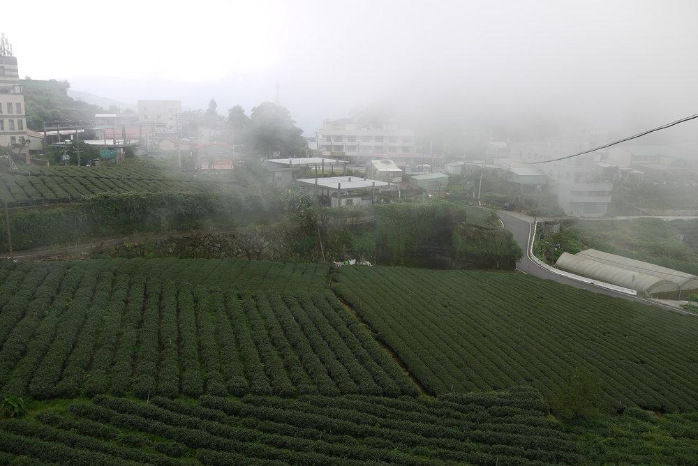 日紅製茶235.JPG
