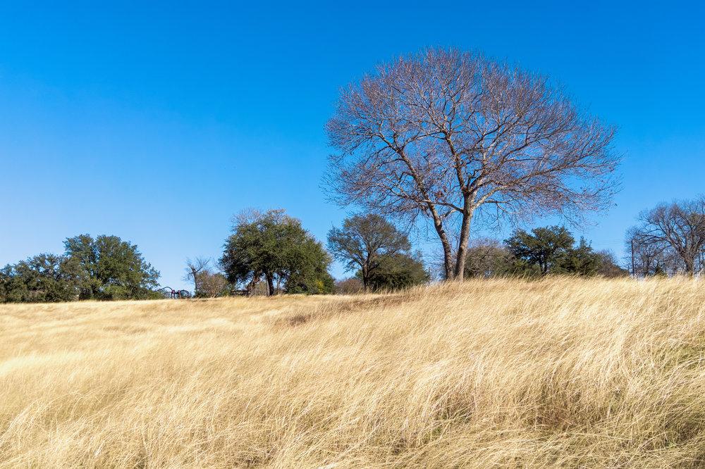 Austin Prairie