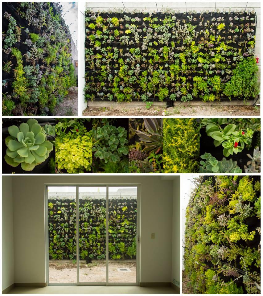 Green walls 2.jpg