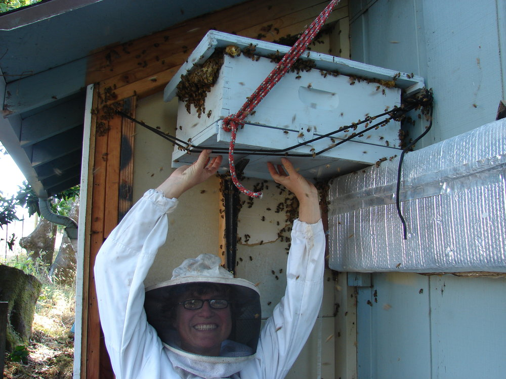 Liz holding Nuc while bees move in