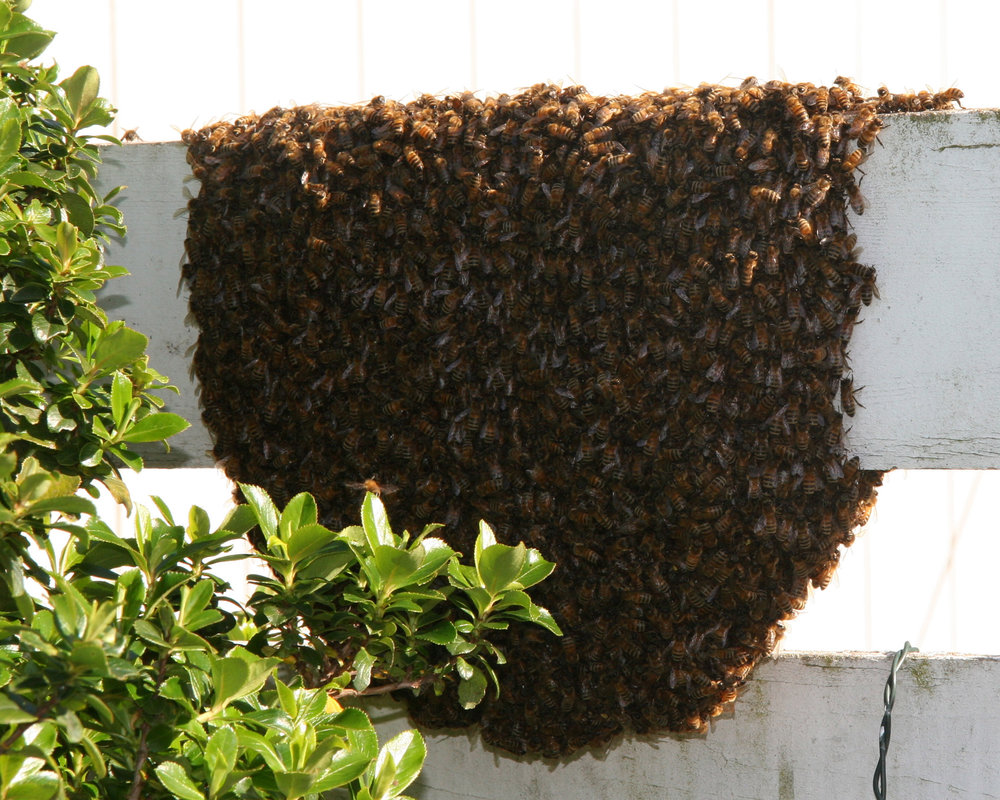 Swarm on Fence