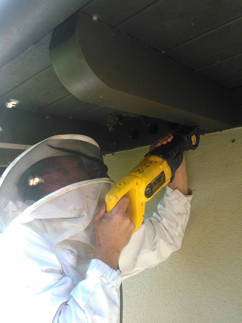 "Joey cuts the blocking to expose the hive in the eaves.  This is one of the most common locations.  Bees fit easily through the 1/4"" venting screen."