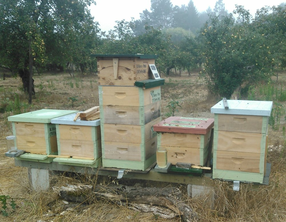 Move hive to apiary:  to pollinate apples & organic berries