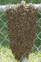 Swarm on a fence