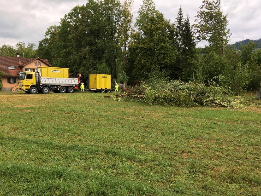 Störende Bäume und Gestrüpp werden fachgerecht entsorgt