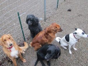 Rhode-Island-dog-training