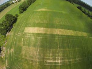 Nitrogen Response in Barley 2014