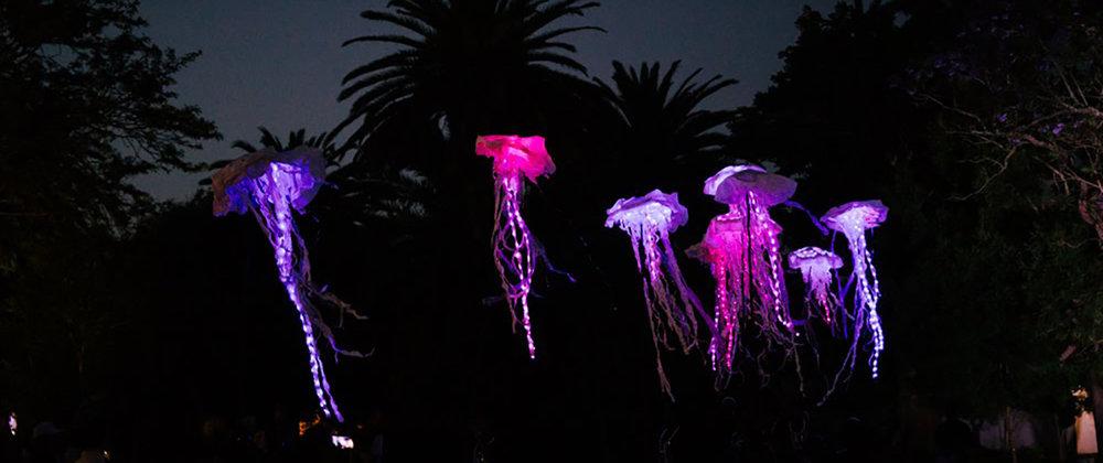 Festival-of-Light-Art-1306-x-548-px-Jelly.jpg