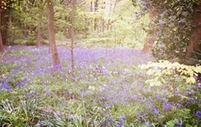 The Bluebell Woods Poetry Competition : A nature-themed poetry competition with an outdoor creative writing workshop organised by The Hedge Arts Project for PARTIA at Aintree University Hospital NHS.