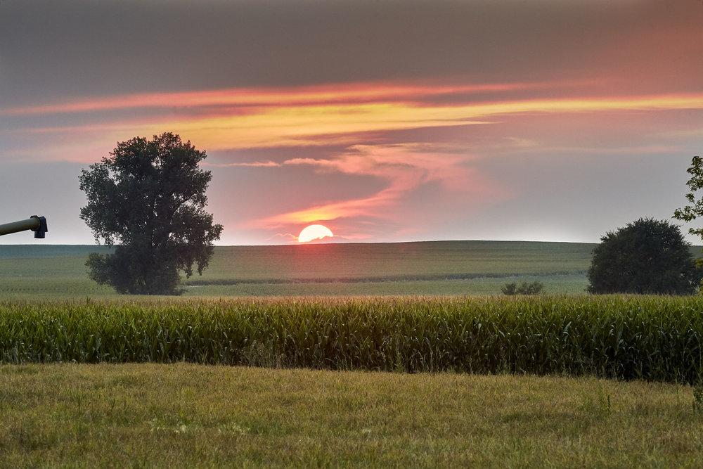 Mogler Farm Corn Field.jpg