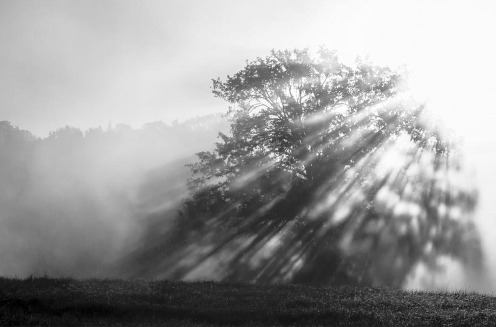 Misty-Rays.jpg
