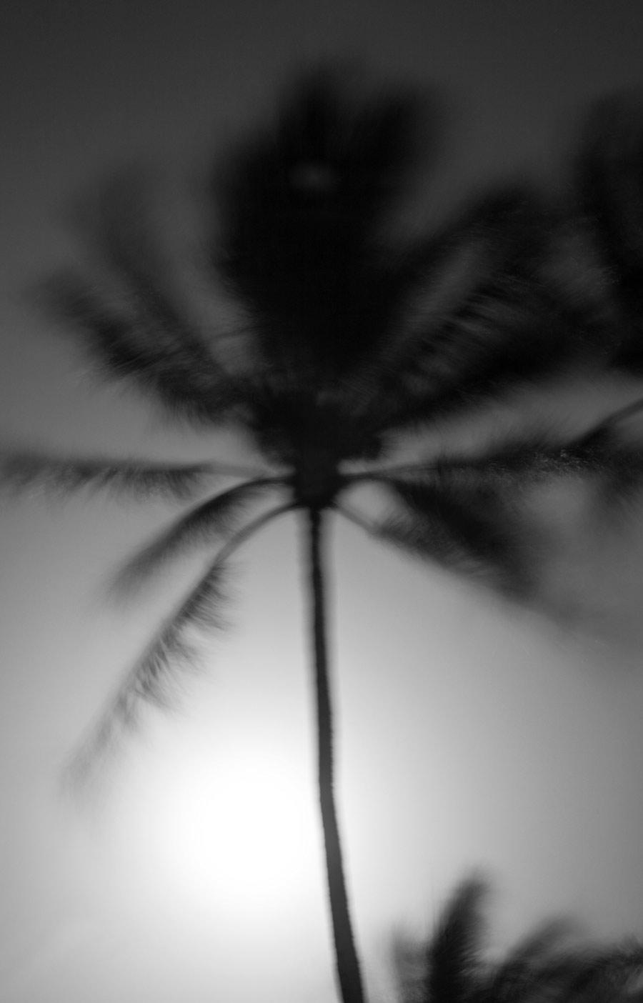 Palm-in-Moonlight.jpg